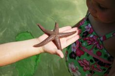 Sea starfish found while on a shelling tour with Good Time Charters Fort Myers Beach Florida