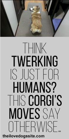 Think Twerking Is Just For Humans? This Corgi's Moves Say Otherwise! :)