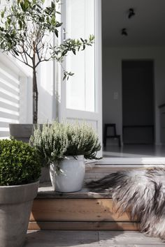 pots - herb, olive and buxus
