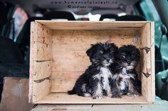 Bibelouri Dogs, Animals, Home Decor, Animales, Decoration Home, Animaux, Room Decor, Doggies, Interior Design