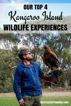 One of the extra experiences you can do at the Raptor Domain on Kangaroo Island in Australia is hold Tilka the Wedge-tailed Eagle - Our Top 4 Kangaroo Island Wildlife Experiences - The Trusted Traveller
