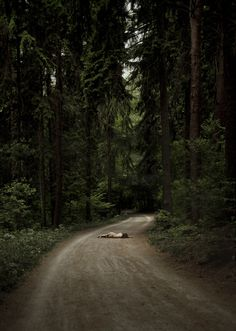 Sonia Szóstak's diverse photographic style chosen to represent her country at concept store... http://www.we-heart.com/2014/08/05/sonia-szostak-longboards-tattoos-and-a-journey-to-mars-at-no-wodka-berlin/   #Fairytale  #Forest