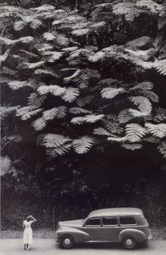 "Photograph by Charles Allmon. From ""Martinique: A Tropical Bit of France,"" National Geographic, February, ""Towering Tree Ferns Spread a Lacy Canopy Above a Martinique Hillside These Black White Photos, Black And White Photography, National Geographic, Vintage Photography, Art Photography, Landscape Arquitecture, Eugenia Loli, Foto Poster, Big Leaves"