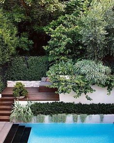4 of the best swimming pool designs. Photography by Brigid Arnott. Design by Good manors. Small Swimming Pools, Best Swimming, Swimming Pool Designs, Outdoor Pool, Outdoor Gardens, Small Gardens, Tropical Pool Landscaping, Landscaping Ideas, Modern Landscaping
