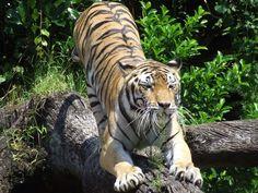 Animal Kingdom, WDW.