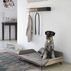 Dog Bed Lets Your Four Legged Friend Lounge In Style - Belgian Interior And Product Designer Gerd Couckhuyt Created The Letto Daybed With Only Doggies Of The Most Discriminating Of Tastes In Mind The Contemporary Dog Bed Is Crafted To Maximize Comfort S # Decoration Palette, Dog Milk, Designer Dog Beds, Dog Furniture, Cheap Furniture, Dog Rooms, Pet Beds, Cute Dog Beds, Dog Houses
