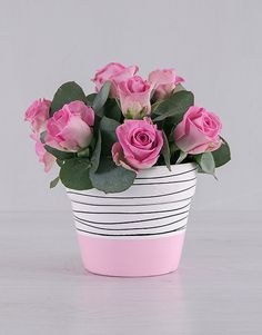 These pink roses are