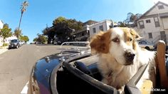 This dog ridin' in style: | 14 Animals Who've Got A Pretty Sweet Deal Going On