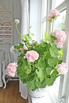 Types of Houseplant Bugs and Methods to Check Their Infestation Vibeke Design Geraniums Garden, Red Geraniums, Garden Plants, Indoor Plants, House Plants, Potted Plants, Geranium Plant, Pink Geranium, Container Plants