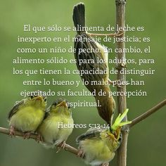 Looking for my own spiritual food #SolidOne #SpiritualGrowing #bible #MyResponsibility