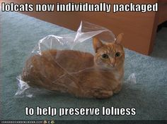 My cat does this all the time, she loves grocery shopping days, overwhelming so many plastic bags