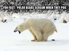 funny polar bear pictures | Dump A Day Random Funny Pictures - 37 Pics