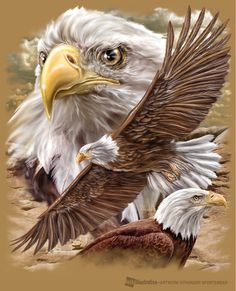Realistic Eagle Drawing | Eagle Cliff by joe6peck