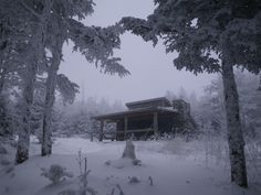 Snowy day at Mt. LeConte.