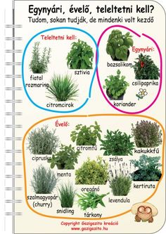 backyard designs – Gardening Ideas, Tips & Techniques Herb Garden In Kitchen, Home Vegetable Garden, Outdoor Plants, Outdoor Gardens, Small Gardens, Back Gardens, Back Garden Landscaping, Garden Forum, Organic Gardening Magazine