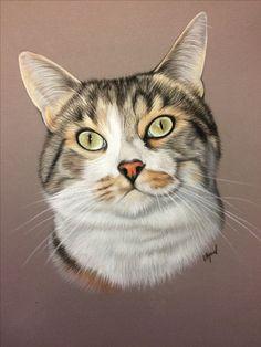 Pastel Portraits, Pet Portraits, Animal Drawings, Art Drawings, Chats Image, Color Pencil Art, Cat Colors, Art Challenge, Cat Tattoo