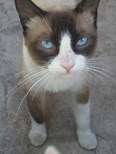 Grumpy bro 6