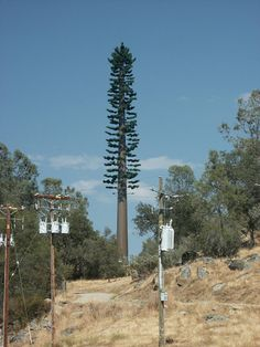 Example of a Cell Phone Tower designed to resemble a tree, also known as a stealth site. Cell Site, Fake Trees, Electromagnetic Radiation, Tower Design, All Band, The Cell, Christmas And New Year, Pine Tree, Earth