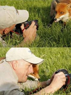 This fox is really curious. He must have been photographing him for a long time.