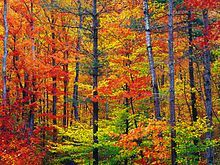 220px-New_hampshire_colors.jpg (220×165)