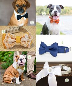 Wedding Gear for Dogs! Thinking about including your pup in your wedding day? Here's a roundup of great ideas to add a pop of your wedding colour in! Collars, flowers, bandanas, and bow ties! Oh my!