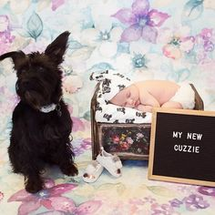 When you ask me what I do, I say I create positivity and love💕💕💕Thank you Mom and for helping me do this! Super sweet photo by . Thank You Mom, Personalised Gifts, So Much Love, Newborn Gifts, Schnauzer, Newborn Photography, Positivity, Babies, Gift Ideas