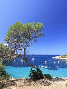 Spain, Balearic Islands, Ibiza, Cala Salada Beach Lámina fotográfica por Michele Falzone en AllPosters.es