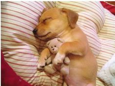 We are all born to cuddle.