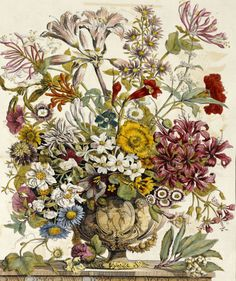 Hand Colored Engraving Of Bouquet- October, 'Twelve Months Of Flowers', 1730. Art Print by Robert Furber Easyart.com