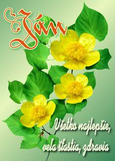 Ján Všetko najlepšie, veľa šťastia, zdravia Birthday Wishes, Birthdays, Plants, Wishes For Birthday, Birthday, Flora, Plant, Birthday Greetings, Happy Birthday Greetings