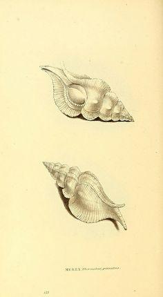 Zoological illustrations on Biodiversity