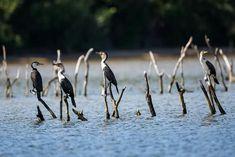 iSimangaliso: Park for the people - Africa Geographic Magazine Wetland Park, Kwazulu Natal, African Safari, Zimbabwe, Bird Species, World Heritage Sites, Ecology, Adventure Holiday, South Africa