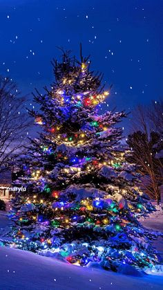 Twinkling Moving Christmas Tree Photo - Animated Christmas Gif - Christmas Tree Lights