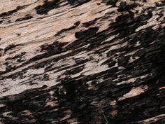 @ Paloma National Park, Australia