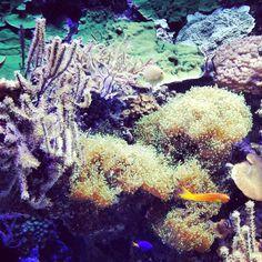 Maria Vittoria Ceschi 2013 - Coralli delle Molucche