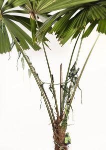 #CairnsBirdwingButterfly #FanPalm #ButterflyRainforest #wirecrochet #artinstallation #studiodeanna #fiberart #CairnsBotanicGarden #crochet #fibreart #coloredcopperwire #firemtngems #crochetwire