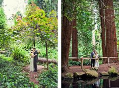 a living space: The Wedding Ones: Venues in the Redwoods