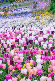 Beautiful Flowers Garden, Beautiful Flower Arrangements, Flowers Nature, Pretty Flowers, Beautiful Gardens, Wild Flowers, Virtual Flowers, Wild Flower Meadow, Flower Pictures