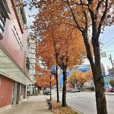 #jesień na ulicy czyli zdjęcie okolicy  A jak u Ciebie z jesienią? Trzyma się dobrze? . Mount Pleasant in #fallcouver . . . . . #veryvancouver #vancouverblogger #vancouverbc #vancityhype #vancouverisawesome #beautifulvancouver #vancitystory #vancouver_canada #vancouvercanada#tammieszkam #polkanaobczyznie #klubpolki #poloniawkanadzie #kanadasienada #polacyzagranicą #streerview #onthestreet