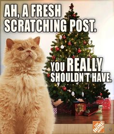 Will the Home Depot's #cat meme go viral? #Advertising #Meme #RichardTheCat
