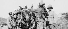 Indian driver loading a pack mule, Gallipoli, World War One, First World, Ww1 Pictures, Last Battle, Old Photos, Division, Istanbul, Modern Art, Photo Galleries