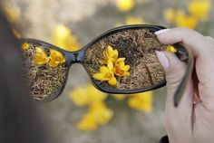 Травы для улучшения зрения