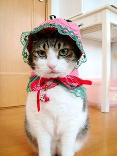 アトリエ☆猫の宮殿~ネリの心象スケッチ
