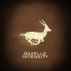 Gazelle intense - visual reminder to stick to Dave Ramsey's baby steps plan.