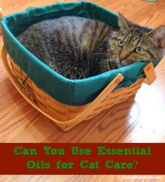 How you can use essential oils for cat care