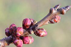 Cum împiedicăm viespile să vandalizeze via și livada Paradis, Fruit Trees, Grape Vines, Gardening, September, Life, Agriculture, Green, Growing Up