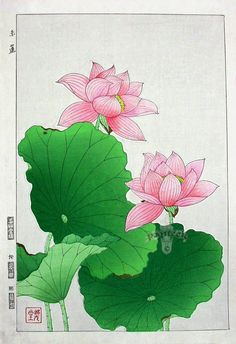 Shodo Kawarazaki, Water Lily