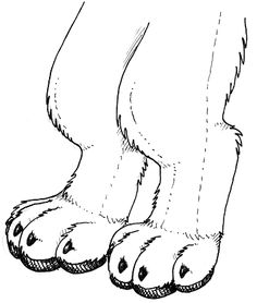 HOW TO SHAPE AND CONSTRUCT A FUR SUIT'S LEGS TO GIVE THE ILLUSION YOU ARE WALKING ON YOUR TOES LIKE AN ANIMAL