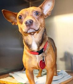 Screech: Terrified and time up at high-kill upstate shelter