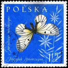 POLAND - CIRCA 1961: A Stamp printed in POLAND shows image of a Black Apollo Butterfly with the inscription